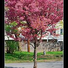 Colors: The Radiant colors of Spring by Potassium