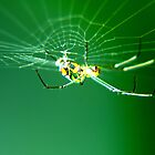 Tiny Neon Spider by BobJohnson