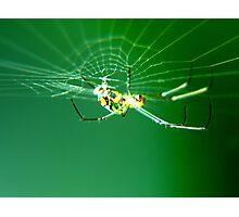Tiny Neon Spider Photographic Print