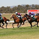 Wine Country Race Club by lulisa