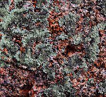 'Lotsa Lichen' by Scott Bricker