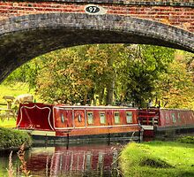 Wild Mink - Near Braunston by SimplyScene