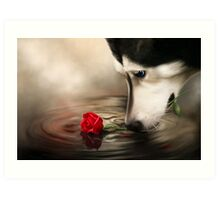 Dog with Rose - Shelter Art Art Print