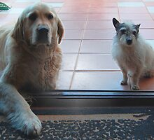 Please can we come inside with you? by cradlemountain