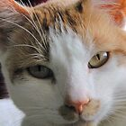 Barney The Cat by brooke1429