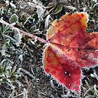 Frozen Fall Leaf by brooke1429