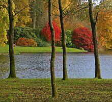Autumn Splendour by RedHillDigital
