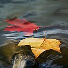 Autumn Floating Leaves by Nigel Bangert