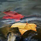 Autumn Floating Leaves by Nigel Bangert