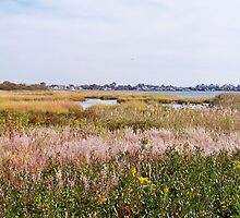 Jamaica Bay Wildlife Refuge by Dandelion Dilluvio