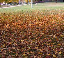 Blanketed Ground by MarianBendeth