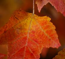 Autumn Red Lights  by Michelle BarlondSmith