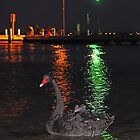 Black Swan At Night  by EOS20