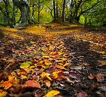 Golden Leaves of Autumn by David Lewins