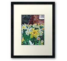 Daffodils with brickwall. Framed Print