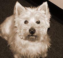 My dog crumb-10 by trainmaniac