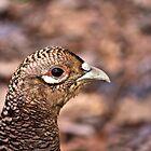 Pheasant Portrait by jskouros