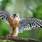 falcon wings by jaki good