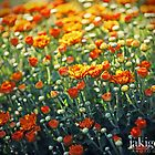 flourish of mums by jaki good