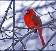 frosty cardinal by jaki good