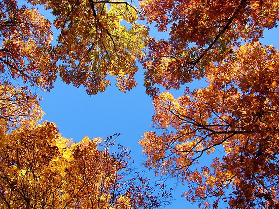 Autumn Towers by NatureGreeting Cards ©ccwri