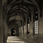 Cloister and rose by tj57