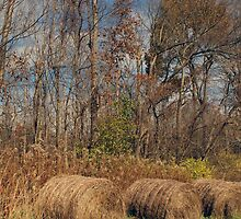 Hay Bales 1 by gailrush