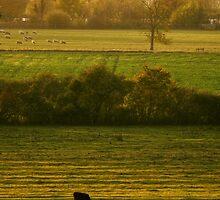Across the valley - Bucks, UK by George Parapadakis (monocotylidono)