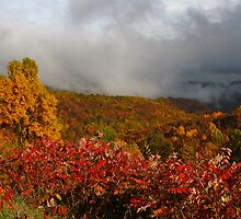 Fog on the Mountain by Deb Snelson