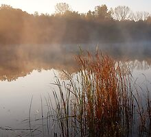 Just Another Misty Morning by Curtiss Simpson