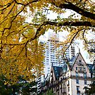 Viewing Central Park West by Ainadel Ojeda