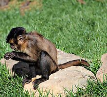 THE MONKEY IN ME by Cheryl Hall