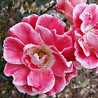 Pink with White Edges by Harvey Schiller