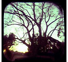 Crepuscule Photographic Print