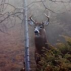 Big necked buck - White-tailed Deer by Jim Cumming