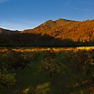 Sonoma Shadows at Sunset by MattGranz