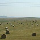 Southern Alberta hay fields by dixiemorgan