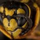 Yellow Jacket Macro by Douglas Gaston IV