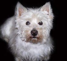 My dog crumb-7 by trainmaniac