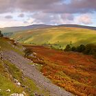 Autumn in Wharfedale by Andrew Leighton