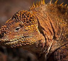 Yellow Land Iguana by becks78