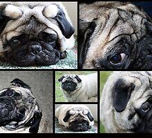 Precious Pug by SKNickel
