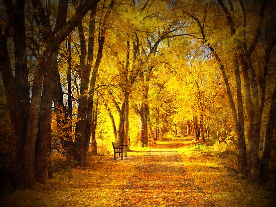 The Golden Pathway by Tara  Turner