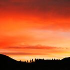 Nevada Sunset by Micci Shannon