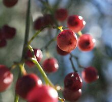 Pepper Berry by Maryanne Lawrence