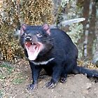 Tasmanian devil by joewdwd