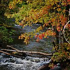 The Creek by deb cole