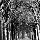 Tangled Trees by Clare Forder