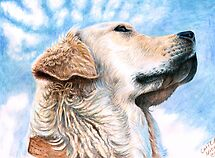 Golden Retriever by Nicole Zeug