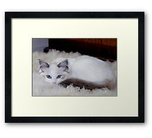 She will win your heart.... Framed Print